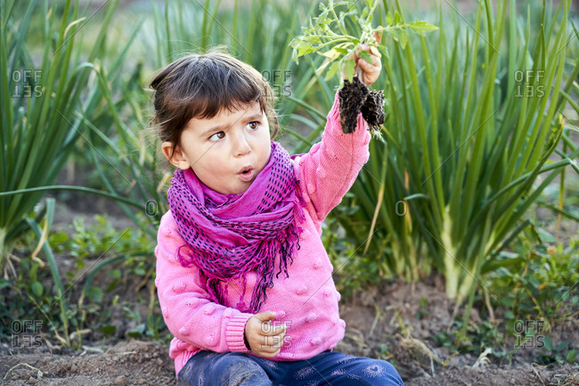 Portrait of toddler girl in the garden looking at small tomato plant in her hand