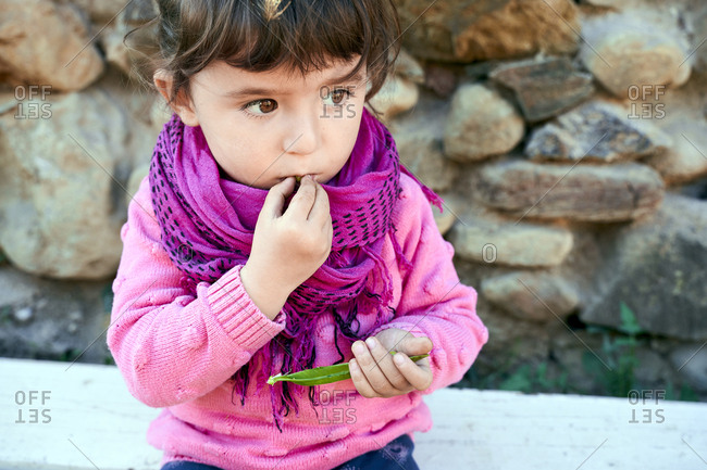 Portrait of toddler girl eating fresh green peas from pod in the garden