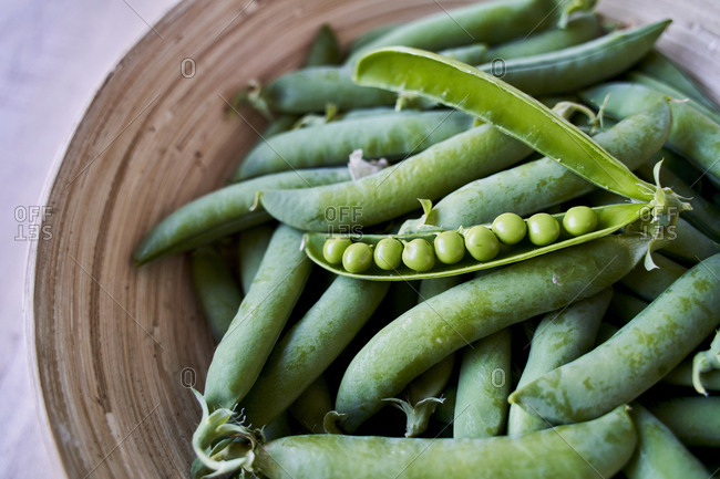 Freshly picked organic peas- close-up