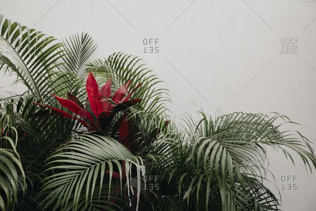 Mexico- exotic plant