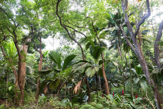 Seychelles- rain forest