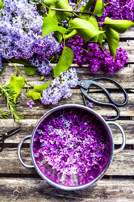 Preparation of lilac syrup- rosemary and lemon