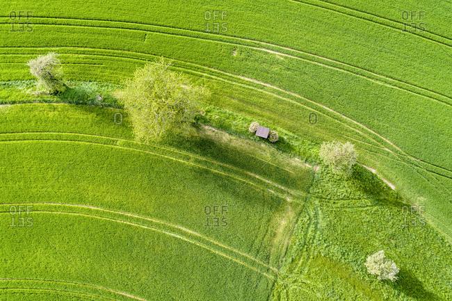 Germany- Baden-Wuerttemberg- Rems-Murr-Kreis- Aerial view of green field in spring