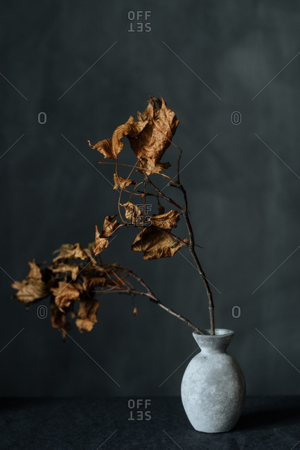 Brown leaves on a branch in a vase