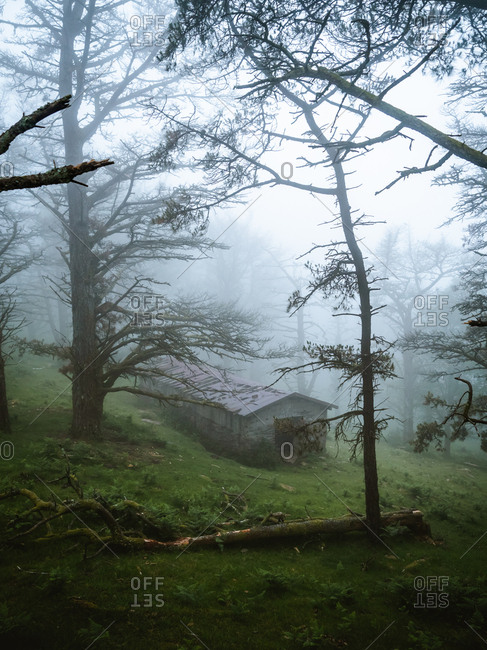 Abandoned mountain hut in a creepy forest