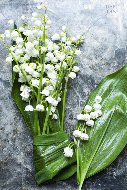 A bouquet of Lily of the Valley on a table