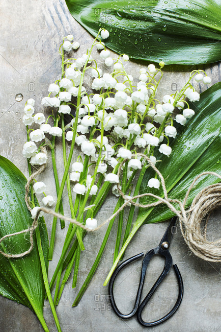 Lily of the Valley flowers being prepared on a table
