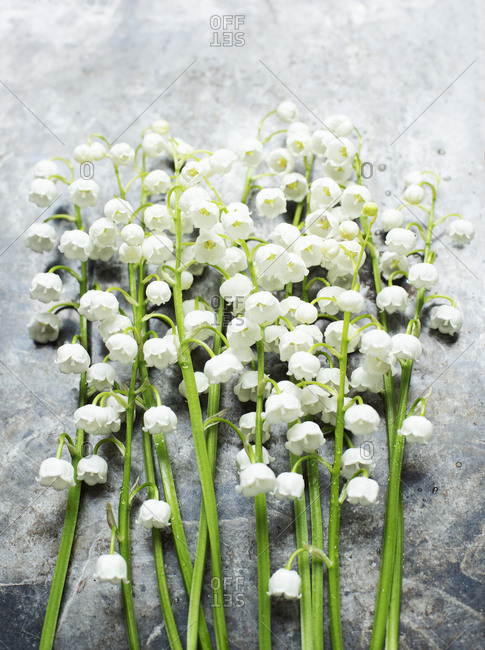 Lily of the Valley flowers on light background
