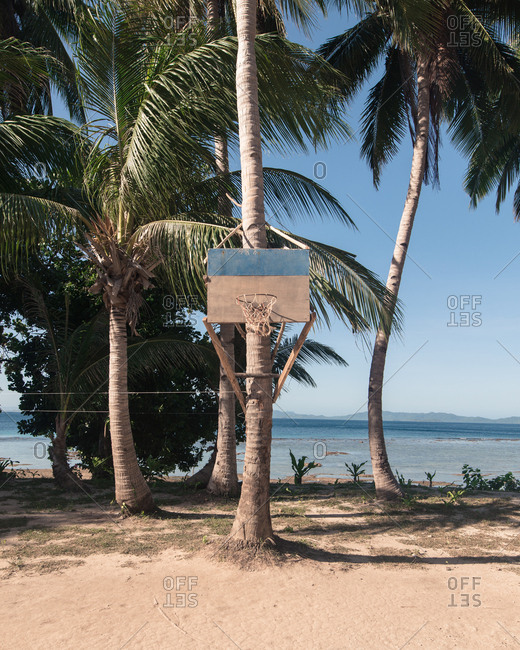 Island Basketball net on palm tree
