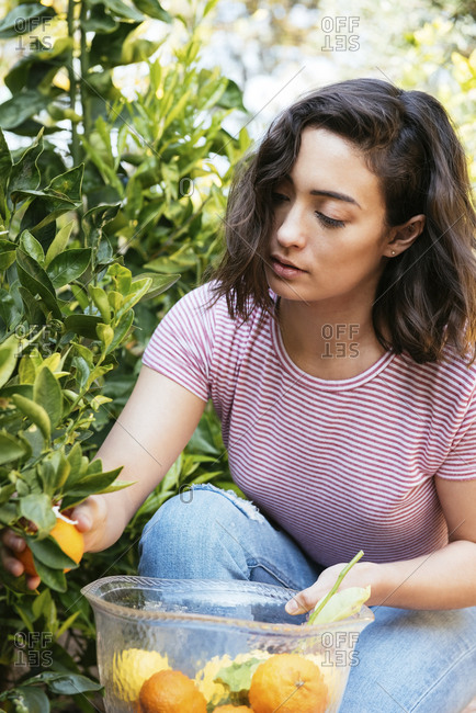 Woman collecting oranges in glass bowl from backyard