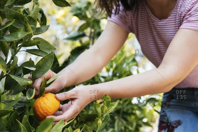 Midsection of woman holding orange in backyard
