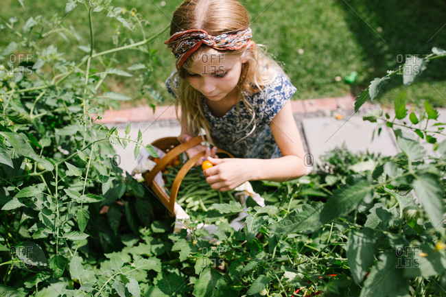Blonde girl picking fresh vegetables in a garden