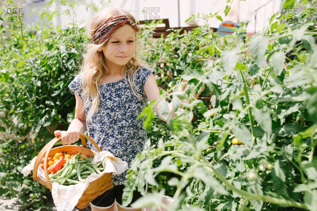 Little girl in a garden holding a basket full of fresh vegetables