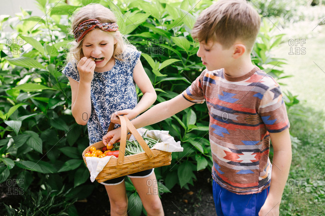 Kids tasting fresh picked veggies from garden