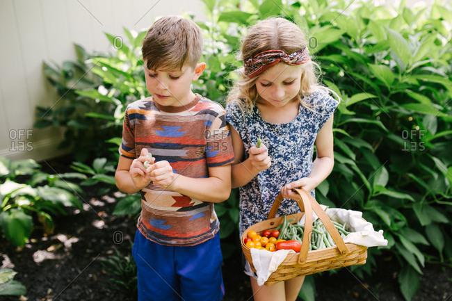 Two kids tasting fresh picked veggies from garden