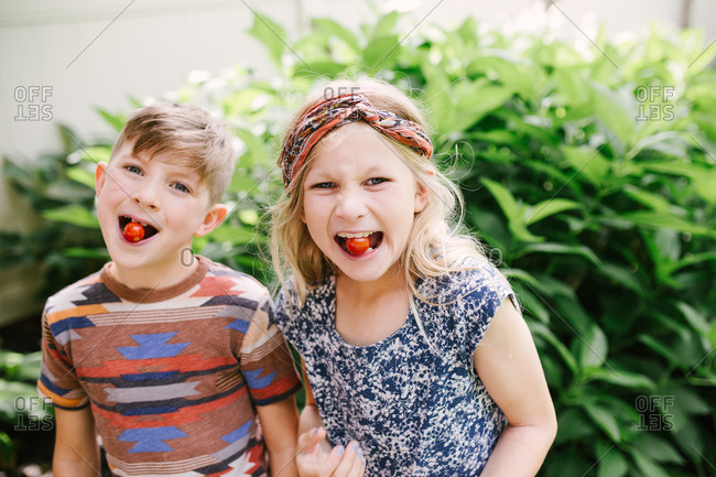 Kids tasting fresh picked cherry tomatoes from garden