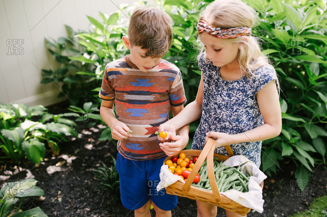 Two kids trying fresh picked veggies from garden