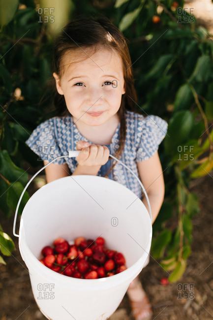 Little girl holding a bucket of fresh picked cherries