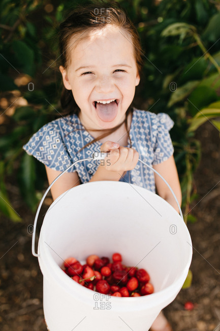 Little girl holding a bucket of fresh picked cherries and sticking out tongue