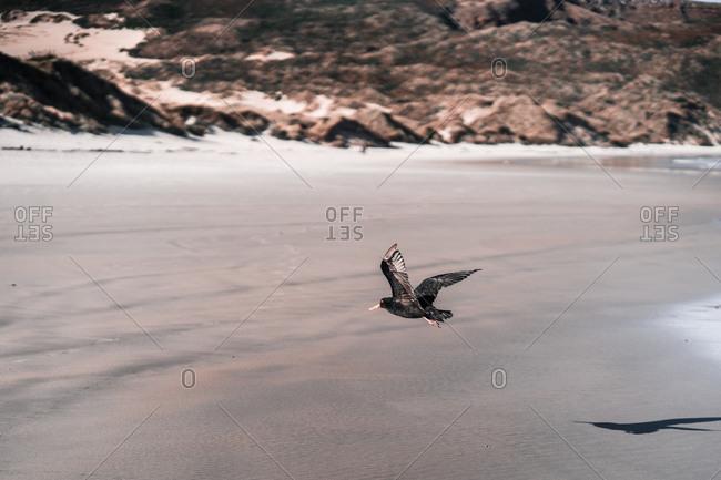 wild bird flying over seashore in beach
