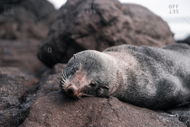 Brown adorable seal lying and enjoying sun on rocky beach in daylight