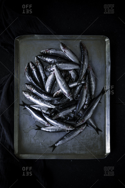 Heap of fresh raw anchovies placed on shabby metal tray against black background