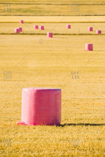 Cereal bales wrapped with pink plastic to show a campaign against breast cancer