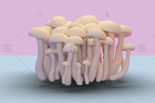Shimeji mushrooms, illustration