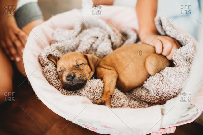 Kids petting sleeping puppy - Offset