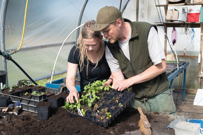 Couple looking at plant starts in a greenhouse