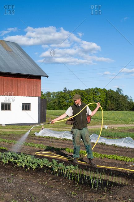 Farmer watering in a garden