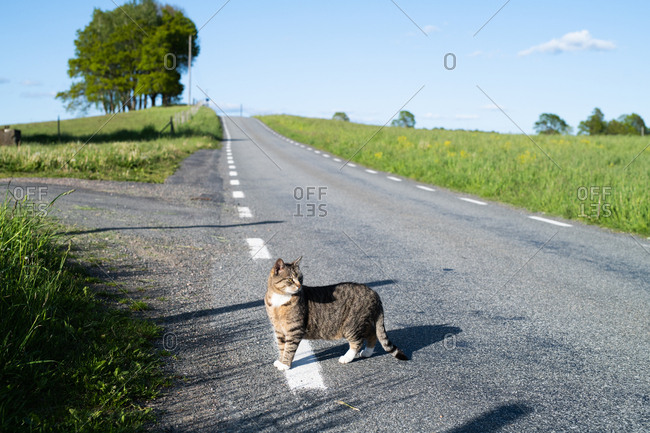Cat standing on country road