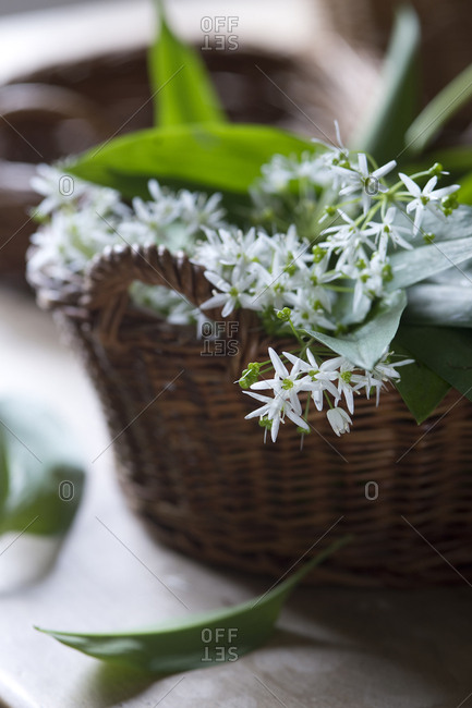 Blossoms of random in wickerbasket
