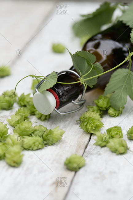Beer bottle- hop cones and tendril on white wood