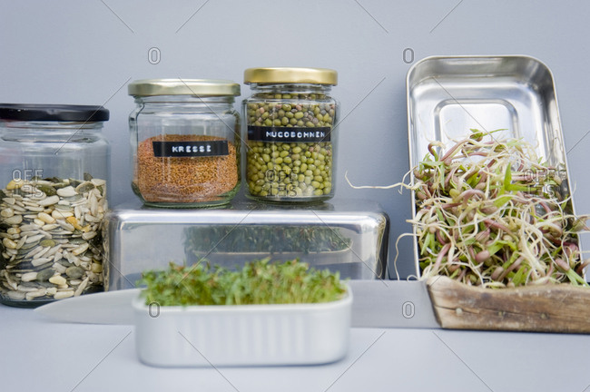 Preserving jars with grain- mung sprouts and cress- home grown sprouts
