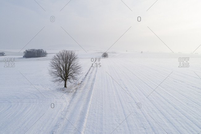 Germany- Bavaria- single linme tree in winter landscape