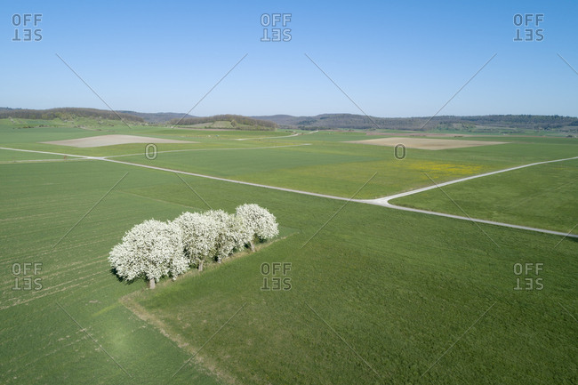 Germany- Bavaria- row of blossoming pear trees in spring seen from above