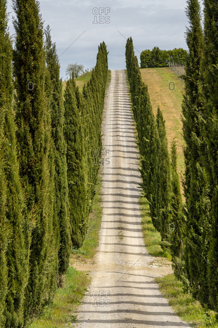 Italy- Tuscany- country lane with cypresses