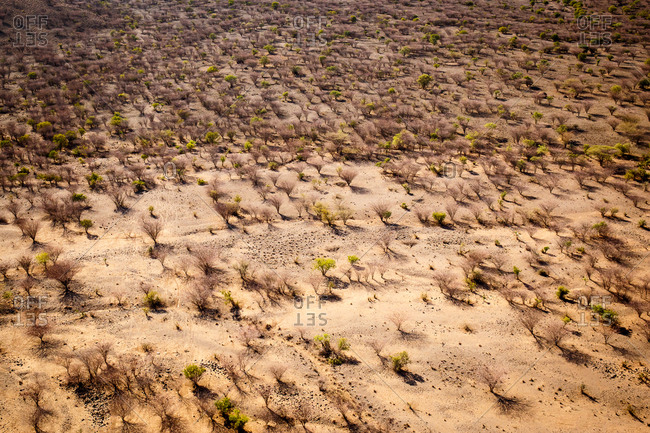 Aerial view of trees on the Laikipia plateau, Northern Kenya, Africa