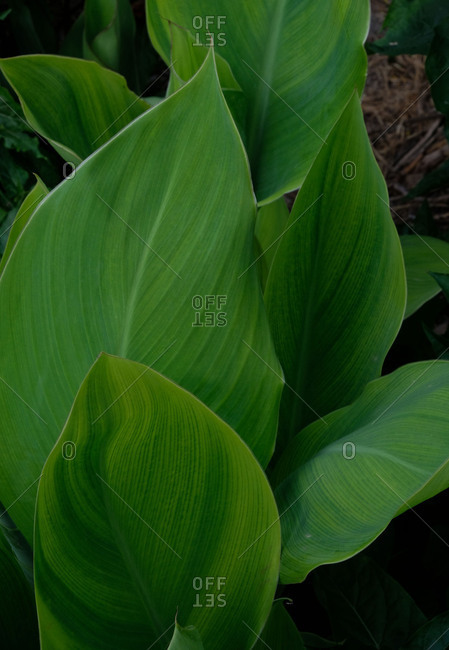 Close up of large green plant