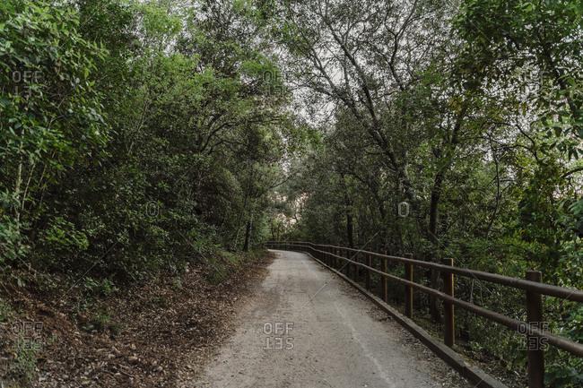 Deserted forest track
