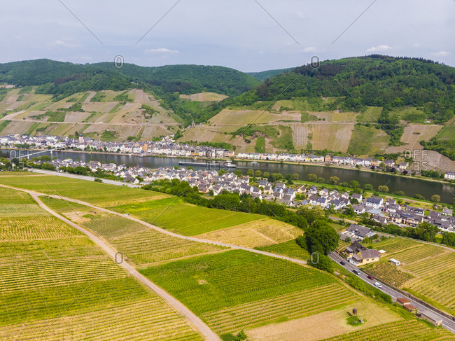 Germany- Rhineland-Palatinate- Zell an der Mosel- vine yards