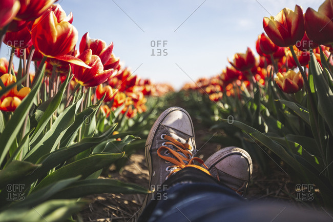 Germany- woman\'s feet in a tulip field
