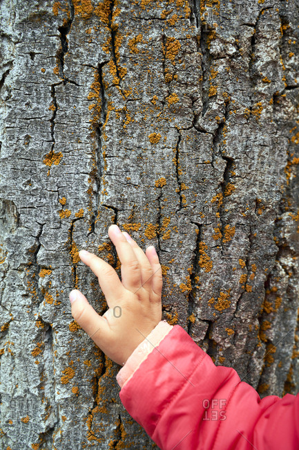 Hand of toddler girl touching bark- close-up