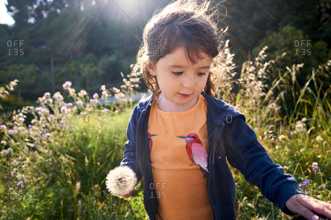 Portrait of toddler girl with blowball in nature