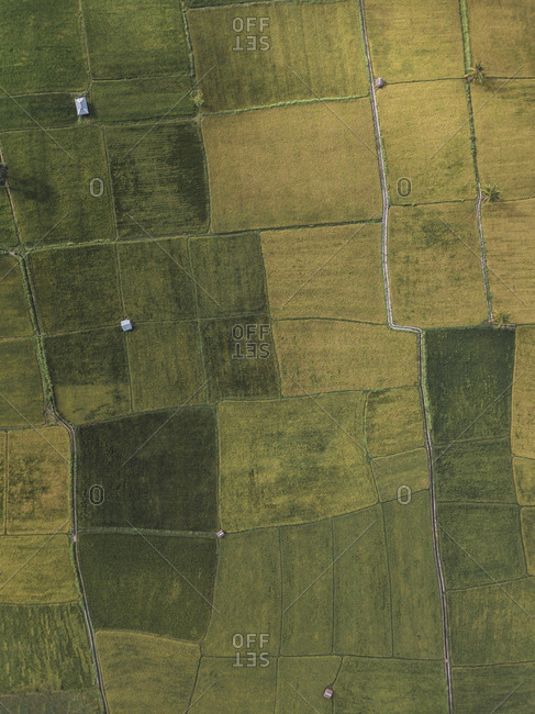 Indonesia- West Sumbawa- Maluk- Aerial view of fields