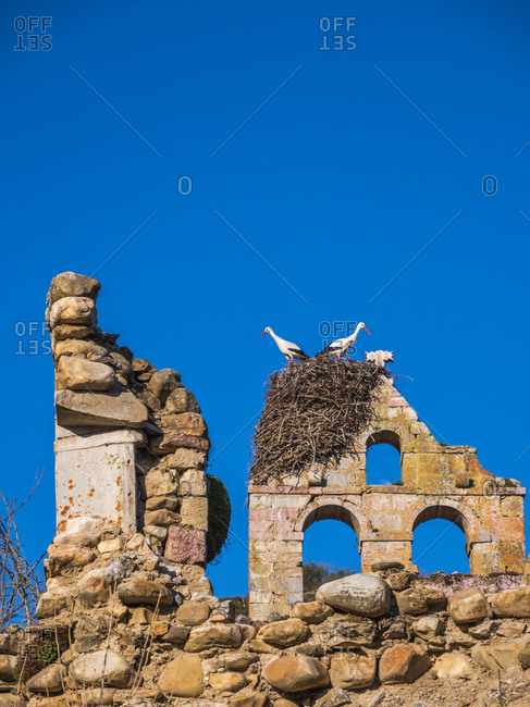 Spain- Asturias- Camposolillo- Cantabrian Mountains- storks and storks nest on a church ruin