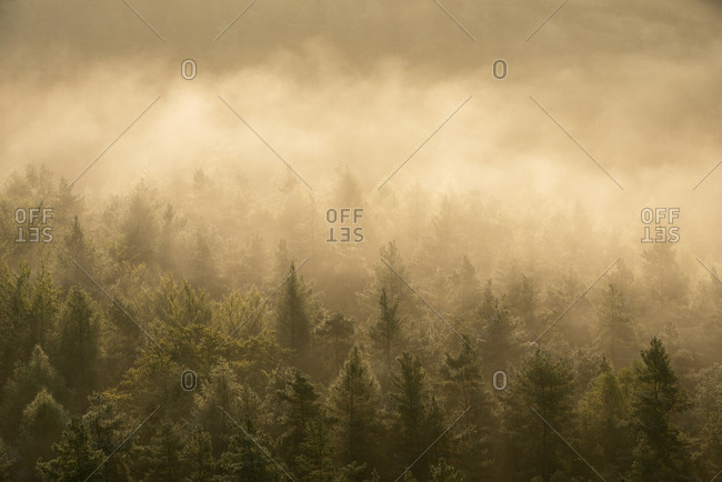 Germany- Saxony- Elbe Sandstone Mountains- view from Gleitmannshorn to fog and forest with dramatic sunlight after sunrise