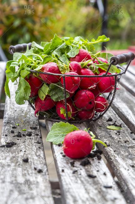 Red radish on garden table