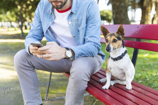 Portrait of dog sitting besides his owner on park bench